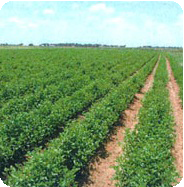 Protege la agricultura